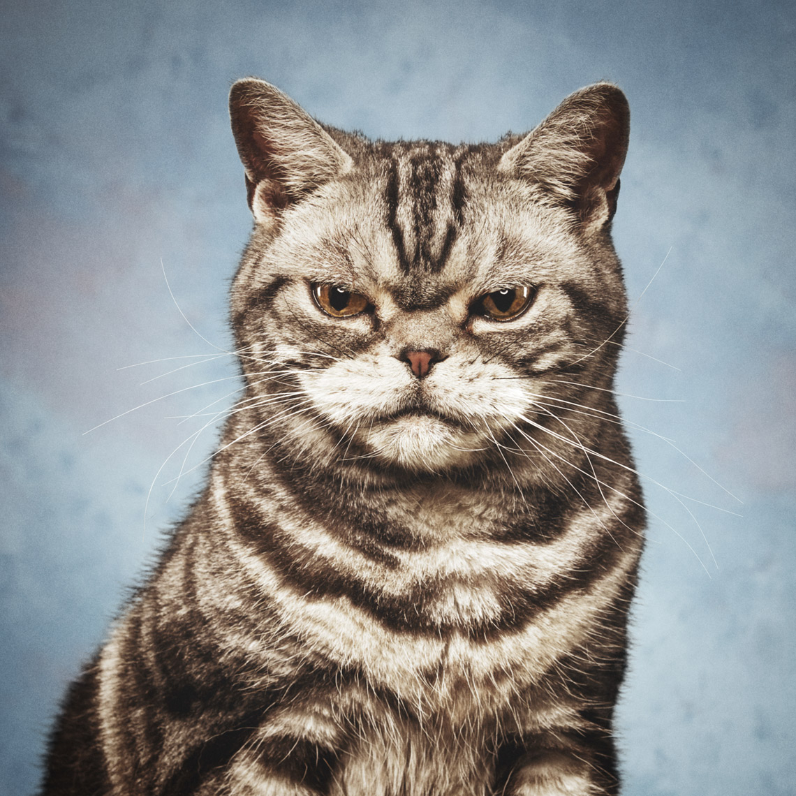 Cat yearbook portrait on retro blue background